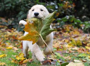 2014. október – Kutya hónap – kínai asztrológiai előrejelzés